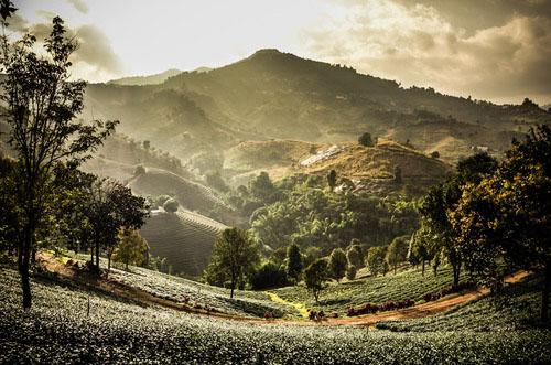 Tour Thailandia Il Triangolo d'Oro 5 giorni 4 notti